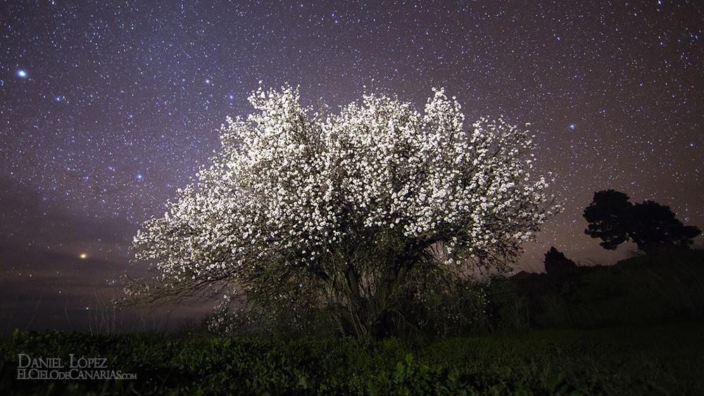 almendro nocturno fondo pantalla peque